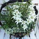 『人気のカズラの鉢シリーズ』豪華なお花たちにひとめぼれ♪エリカの寄せ植え