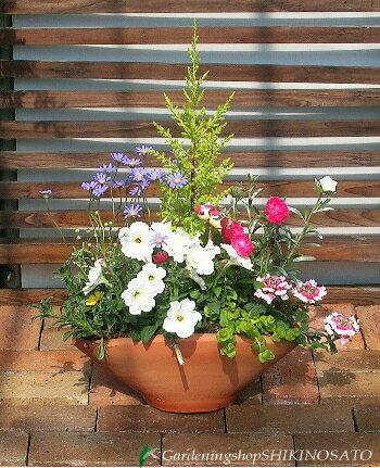 みんなが笑顔になる可愛いお花畑の寄せ植え[Lサイズ]【楽ギフ_メ...