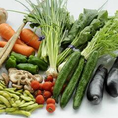 生鮮市場まるひろ 【西日本産】旬の野菜セット【送料無料】