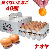 高級卵 雲仙たまご 40個入り 送料無料 産地直送 地卵 高級卵