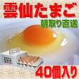 雲仙 たまご 40個入り 卵かけごはんでどうぞ 卵 卵かけご飯 高級卵 九州 新鮮 生卵 TKG もみじたまご 鶏卵 アレルギー 2.0kg〜4.9kg