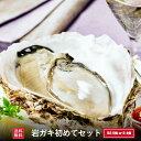 【送料無料】選べる岩牡蠣初めてセット 700g 生食岩ガキ