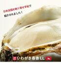 【送料無料】いわがき春香LLサイズ5個セット 約 2Kg 生