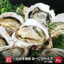 【送料無料】いわがき春香 食べごろサイズ 約2kg 生食 岩