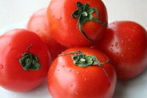 【皇室献上品】話題沸騰!まさにフルーツ!福井県産越のルビートマトフルーツミディトマト 1K...