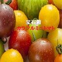 愛知・和歌山・岐阜他ミニトマトの宝石箱約500g箱