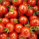 【赤い真珠!まさにフルーツ!】お試し企画!ミニトマト赤いたまたまがギッシリ! 1K化粧箱【...