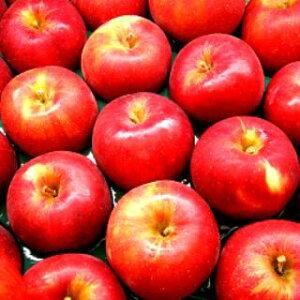 アップルパイには欠かせない!長野・青森産りんご【紅玉】14〜15玉箱【送料無料】