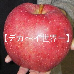 りんご王国から世界一の味わい!!青森・【世界一りんご】特大4玉〜5玉【送料無料】