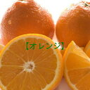 【オレンジ】お徳用30玉入り【送料無料】
