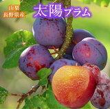 送料無料 スモモ 山梨・長野県産【太陽プラム】500gパック×4毎年8月初旬ごろから入荷予定です
