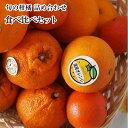 訳ありB級お試し企画旬の柑橘3種類以上お任せ詰め合わせ宝箱果物セット約2K箱ご家庭用・食べ比べ・タップリフルーツ!