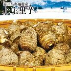 《赤秀2L》*福井県特産上庄サトイモ約10K化粧箱*越前大野の清らかな水と澄んだ自然に囲まれて育った里芋です【お歳暮・贈答用に】【おせち料理に】【送料無料】