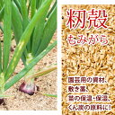 【 籾殻 もみがら 75リットル 】 保温 保湿 緩衝材 長野県産 【 送料無料 】※一部地域有料