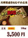 送料無料 広島県産ひとめぼれ 30kg 玄米 5kg×6緑袋令和2年産 1等米