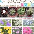 【DM便対応】花の種(花畑)全4色おうちでカンタン ガーデニング/フラワリーランド
