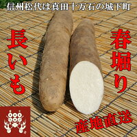 信州松代産長芋!山芋!食欲増進健康長いも!【5kg優品3〜4本】長いも!