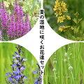 山野草セット:夏の湿地に咲くお花達4種各2ポットセット【ミソハギ・クサレダマ・サワギキョウ・タマミクリ】