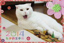 人気猫ブログ『たまの玉手箱』のShippoTVオリジナル猫カレンダー。【予約】たまの玉手箱 卓上カ...