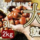 日本屈指の栗処愛媛。その中でも四国山脈に面する城川がお届けする大粒の生栗「3Lサイズ」。【...