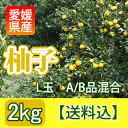 """【送料込】愛媛産の""""A/B級混合生柚子""""[2kg入・15玉〜18玉]"""