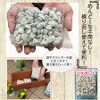 鉢底に入れる石 ネット分包0.5L鉢底石・軽石【自然応用科学】