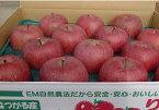 まるかじりできる津軽岩木山のリンゴ!徹底減農薬、無袋栽培 サンふじ・王林(ご贈答用)5kg 【発送 11月中旬 〜 12月下旬】
