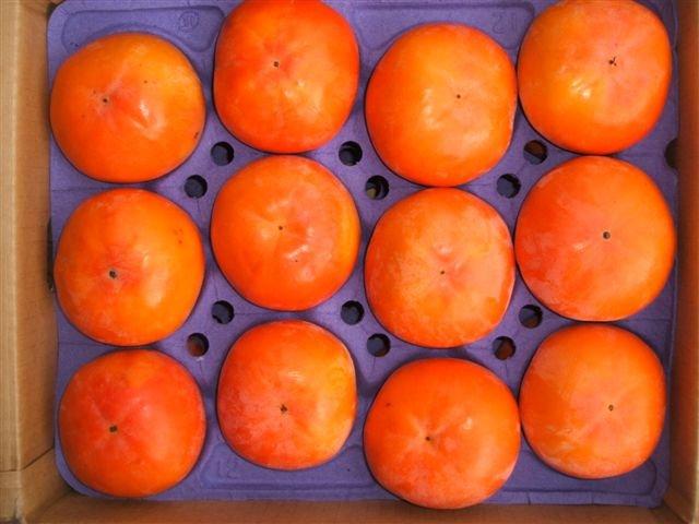 フルーツ・果物, 柿  3L 3010kg1012