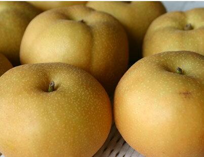 新高よりもジューシーで柔らかい低農薬有機肥料新品種の高級梨(南水)約5kg(16~18個)【発送時期:10月中旬頃~12月下旬頃】