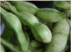 丹波だからできる大きく甘く濃い贅沢な枝豆!丹波の黒豆の枝豆 3kg(枝付き)【発送 10月上旬 ~ 10月下旬】
