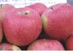 まるかじりできる津軽岩木山のリンゴ!徹底減農薬、無袋栽培 シナノスイート(ご家庭用)5kg 【発送10/20 〜10/31】
