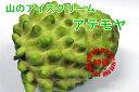 【送料無料】冷やして食べるとバニラアイス?!希少、珍味!沖縄産アテモヤ 1.5kg(5〜11個)【発送期間 12月上旬〜4月中旬頃】