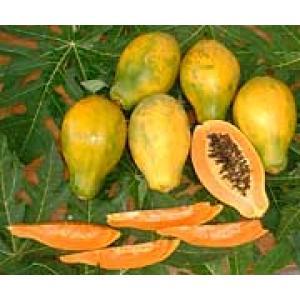 【ただ今出荷までお時間を要しております】【送料無料】沖縄産・フルーツパパイヤ 2kg(3~9個)
