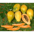 【ただ今出荷までお時間を要しております】【送料無料】沖縄産・フルーツパパイヤ 2kg(3〜9個)