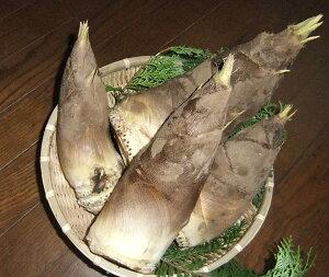 粘土質土壌だから日本一と言われる美味さ根本まで柔らかくアクがほとんど無い千葉・大多喜の た...