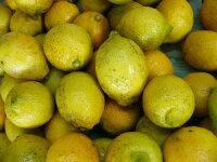 【わけあり】人気沸騰!瀬戸田の有機肥料栽培レモン5kg(約50個)【発送10月中旬〜6月下旬】(時期によりグリーンレモンになります)