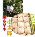 愛媛県産 バイヤーが選んだ美味しいもん 「越冬早生 小太郎みかん」1箱15玉
