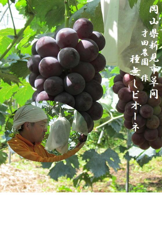 フルーツ・果物, ブドウ  12kg24