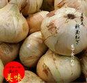 長崎県産玉ねぎ