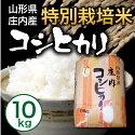 【送料無料】【山形県庄内産】特別栽培米こしひかり10kg