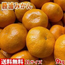 【送料無料】徳島県産 勝浦みかん(晩生みかん・十万) 2Lサイズ 9kg