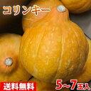 【送料無料】茨城県産 生食用かぼちゃ コリンキー 5〜7玉入