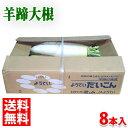 送料無料 北海道産 羊蹄大根(ようていだいこん) 2Lサイズ 8本入り/箱