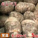 千葉県産 セレベス S〜2Sサイズ 約5kg(箱)