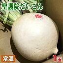 【送料無料】京都府産 聖護院だいこん 約10kg(6〜8玉入)