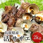 サザエ天然活さざえ2kg【20個前後】鳥取県海の幸日本海お刺身壺焼きBBQバーベキュー【送料無料】