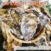 マルえもん[3Lサイズ]30個セット北海道厚岸産牡蠣殻付き牡蠣生食御歳暮お歳暮お取り寄せグルメプレゼントギフト