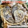 カキえもん[Lサイズ]20個セット北海道厚岸産牡蠣殻付き牡蠣生食御歳暮お歳暮お取り寄せグルメプレゼントギフト