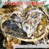 弁天かき[L(A3)サイズ]30個セット北海道厚岸産牡蠣殻付き牡蠣生食御歳暮お歳暮お取り寄せグルメプレゼントギフト