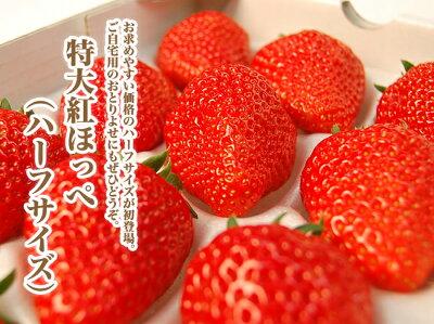 甘いいちごのビタミンCは風邪予防にも◎万全の梱包でお届け!静岡産紅ほっぺ特大いちご(12or15...